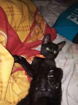 Hermoso gatito tierno de 4 meses en adopción