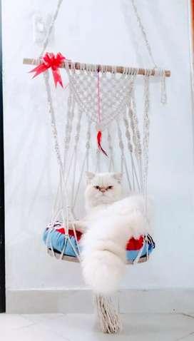 Cama, Hamaca para Gatos.