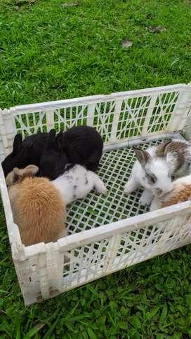 Conejos NZxM