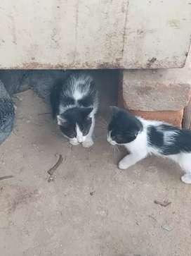 Se regala 3 gatitos juguetones