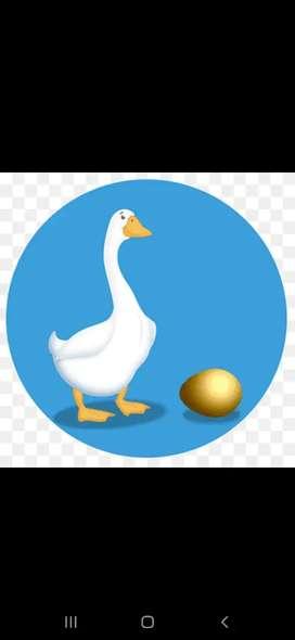 huevos de ganso