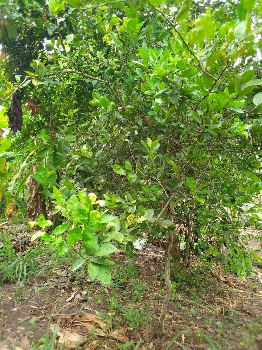 Vendo 16 hectáreas deTerreno en bagua copahin