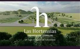 LAS HORTENCIAS 2