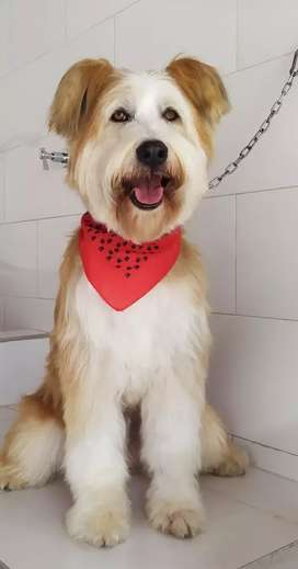 Peluquer@ canino