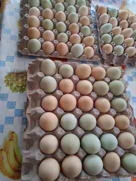 Se vende cubetas de huevos criollos