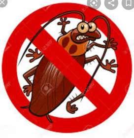 Fumigaciones para cucarachas
