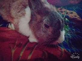 Conejo en adopción urgente