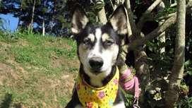 En adopcion perro: brand pitt (criollo)
