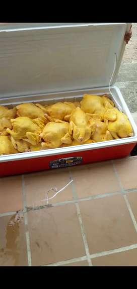 Venta de pollo semicriollo
