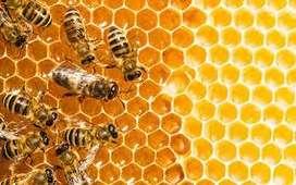 ocacion por mudanza vendo colmenas con abejas