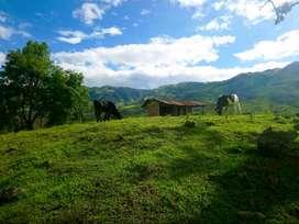 Vendo Terreno de 9,8 cuadras en San Pablo de Atenas provincia de Bolivar