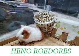 Heno Pangola - Cuy / Cobayos / Conejos /100 Cuyes Conejillos de Indias