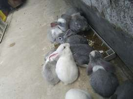 Conejitos de Venta cualquier tamaño