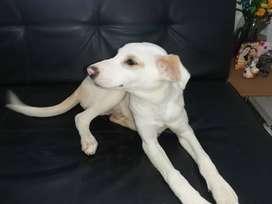 Cachorro de 5 meses en adopción