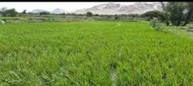 Vendo terreno de arroz y maiz