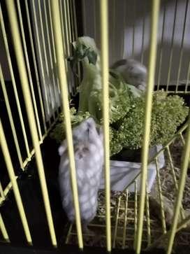 Hamster recién nacidos