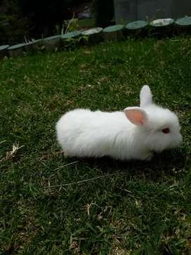 Venta de conejos mascota