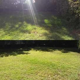 Desmalezados & mantenimiento de jardines