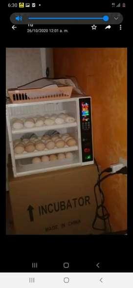 Incuvadora de 60 huevos