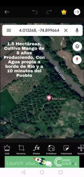 Lote 1.5 has (Una y Media)-Cultivo Mango
