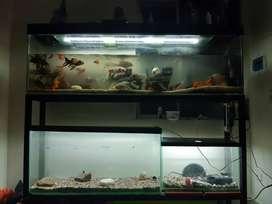 acuarios  y  peces