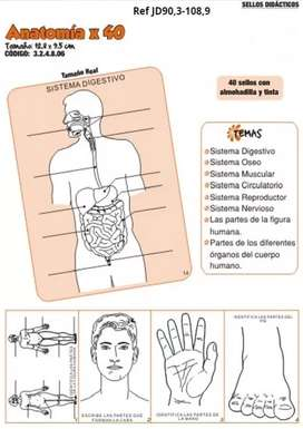 Sellos didácticos Anatomía x 40