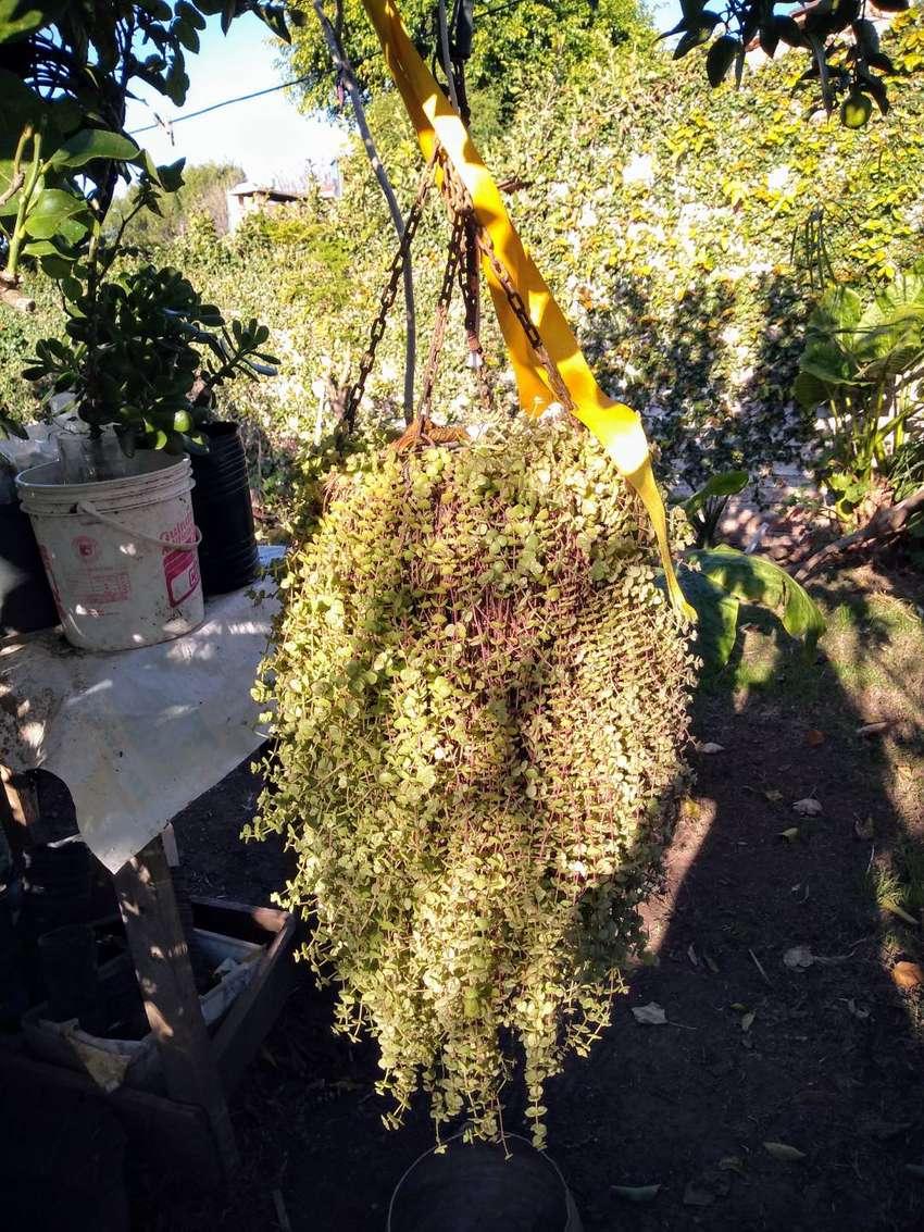 Suculenta Adulta Maceta de terracota Colgante de cadena, maceta de Terracota 0