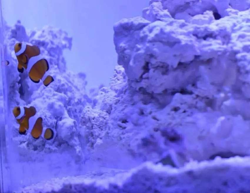 Acuario Reef Marino 40 x 40 Completo 0