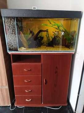 Acuario con mueble armario y peces