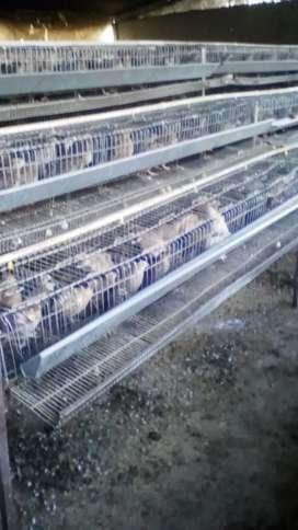Vendo jaulas pará codornices y otros