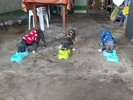 En venta cachorros