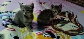 Lindos gatitos en adopcion!