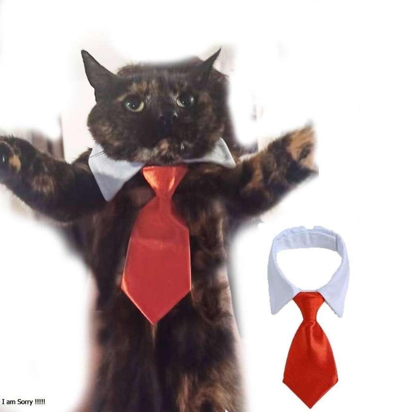 Accesorio de gala Para Tu Mascota gato o perro peuqeño