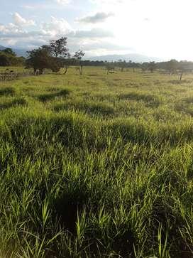 Se arrenda 4 hectáreas de tierra