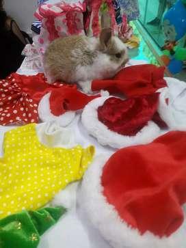 Ropita especial para conejo
