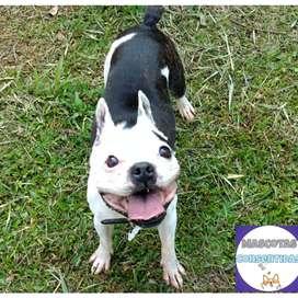 Paseos caninos cuidados de perros y gatos en la comodidad de su hogar, los paseos son 100% personalizados