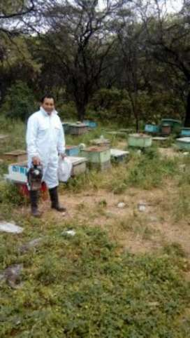 Miel de abejas y sus derivados