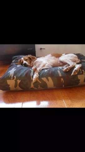 Cama para perro colchoneta