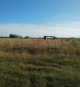 Vendo terreno en Parque Sicardi 20 bis e/ 672 y 673