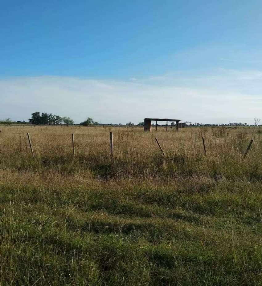 Vendo terreno en Parque Sicardi 20 bis e/ 672 y 673 0