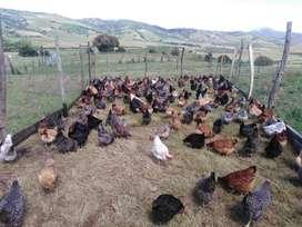 Venta de Huevo Organico en Zipaquira