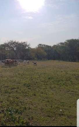 Vendo campo de 50 hectareas con titulo de propiedad, impuesto al dia.Tomo como parte de pago Dpto o casa en buen estado.