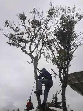 Silvicultura, talas de árboles controladas, podas certificadas