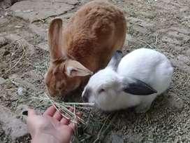Conejos y Conejitos