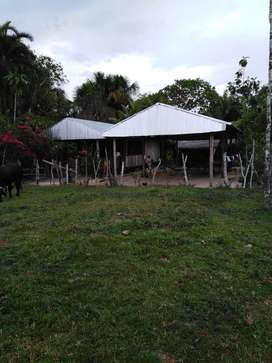 Fundo Ganadero en Yurimaguas