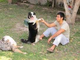cachorro perro raza pedigree pastor aleman adiestramiento canino bulldog ingles frances beagle