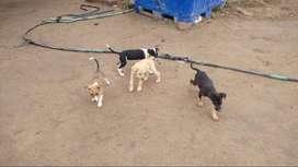 regalo lindos cachoros