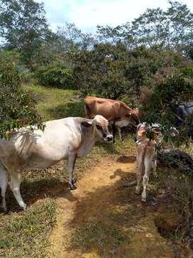 venta de finca  de 15 hectáreas a kilómetros de Barichara