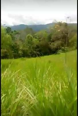 VENDO FINCA EN BOYACA CLIMA TEMPLADO