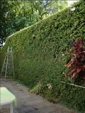 Busco empleo de jardinero o en viveros